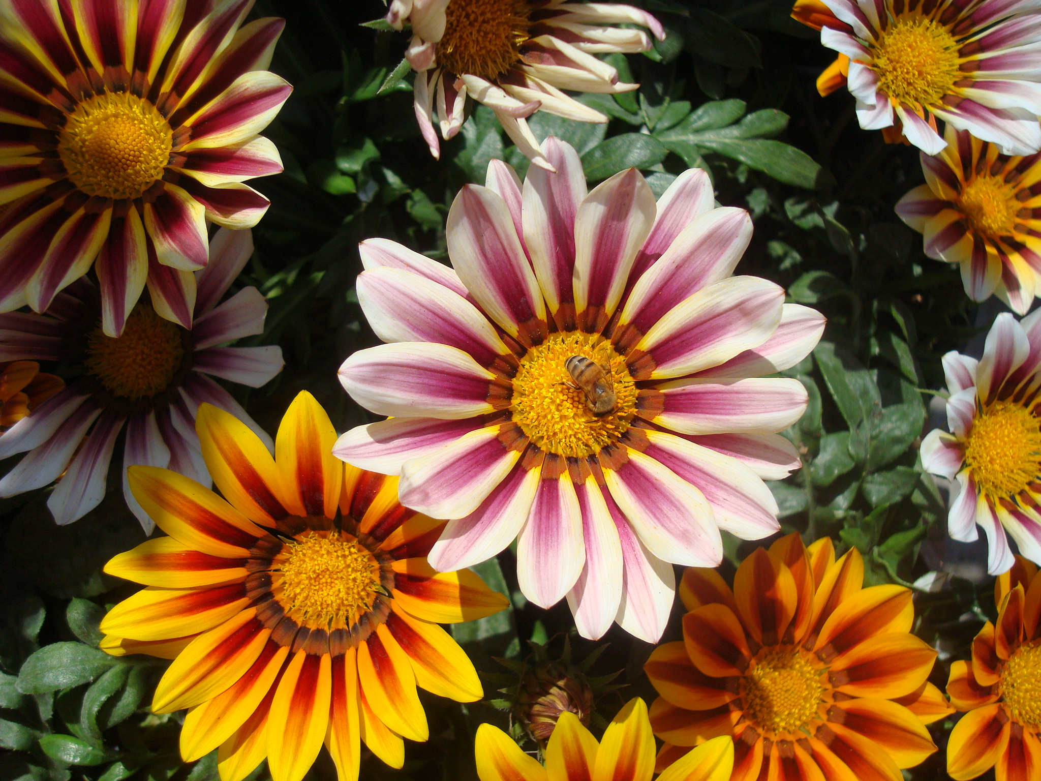 flowers_and_critters_258