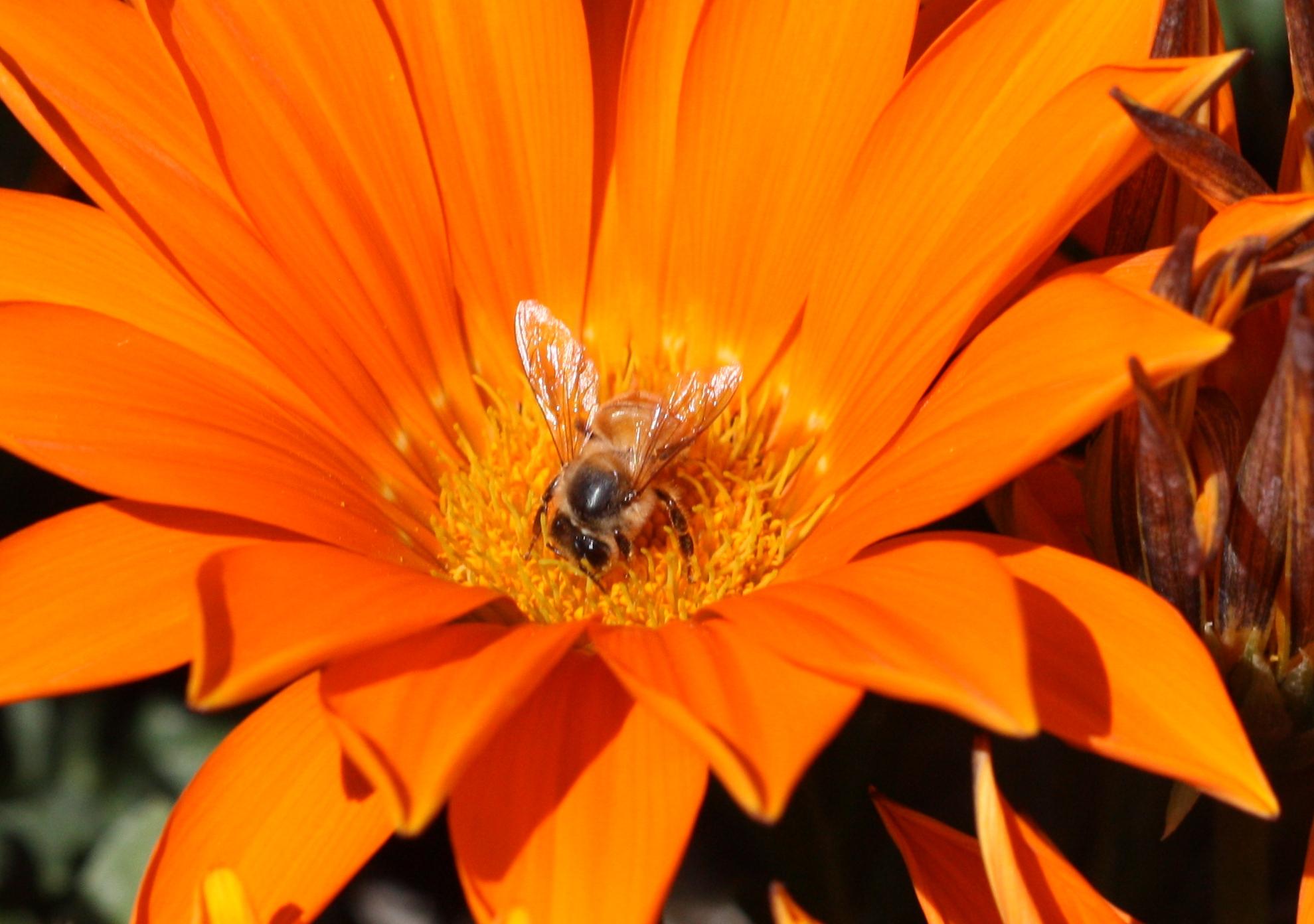 winter_bees_1_11_028